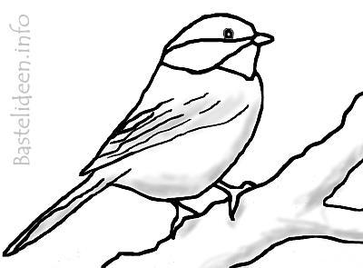 Kohlmeise vogel malvorlage ausmalbild - Vogel vorlage ...