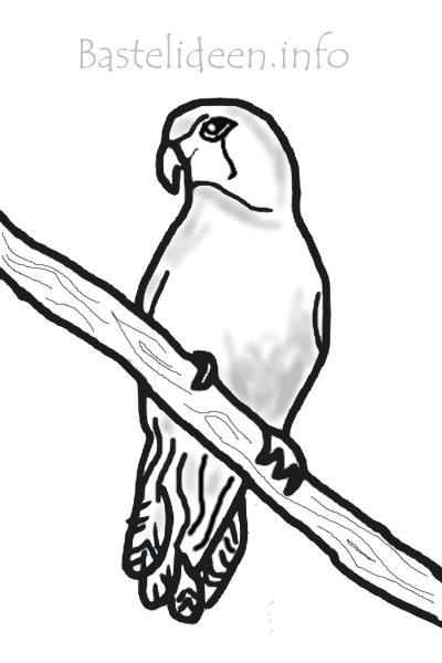 bastelideen  kostenlose papagei malvorlage
