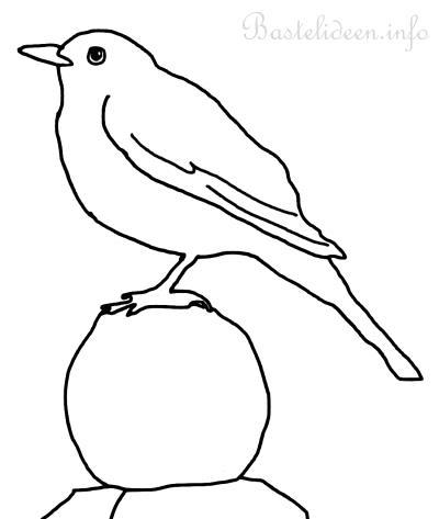Vogel malvorlage oder ausmalbild amsel - Vogel vorlage ...